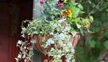 Hanging Baskets (34)